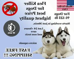 100 Capsules Instant Flea Killer Control Large Dogs 81-125lb