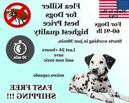 100 Capsules Instant Flea Killer Control Large Dogs 60-91lb
