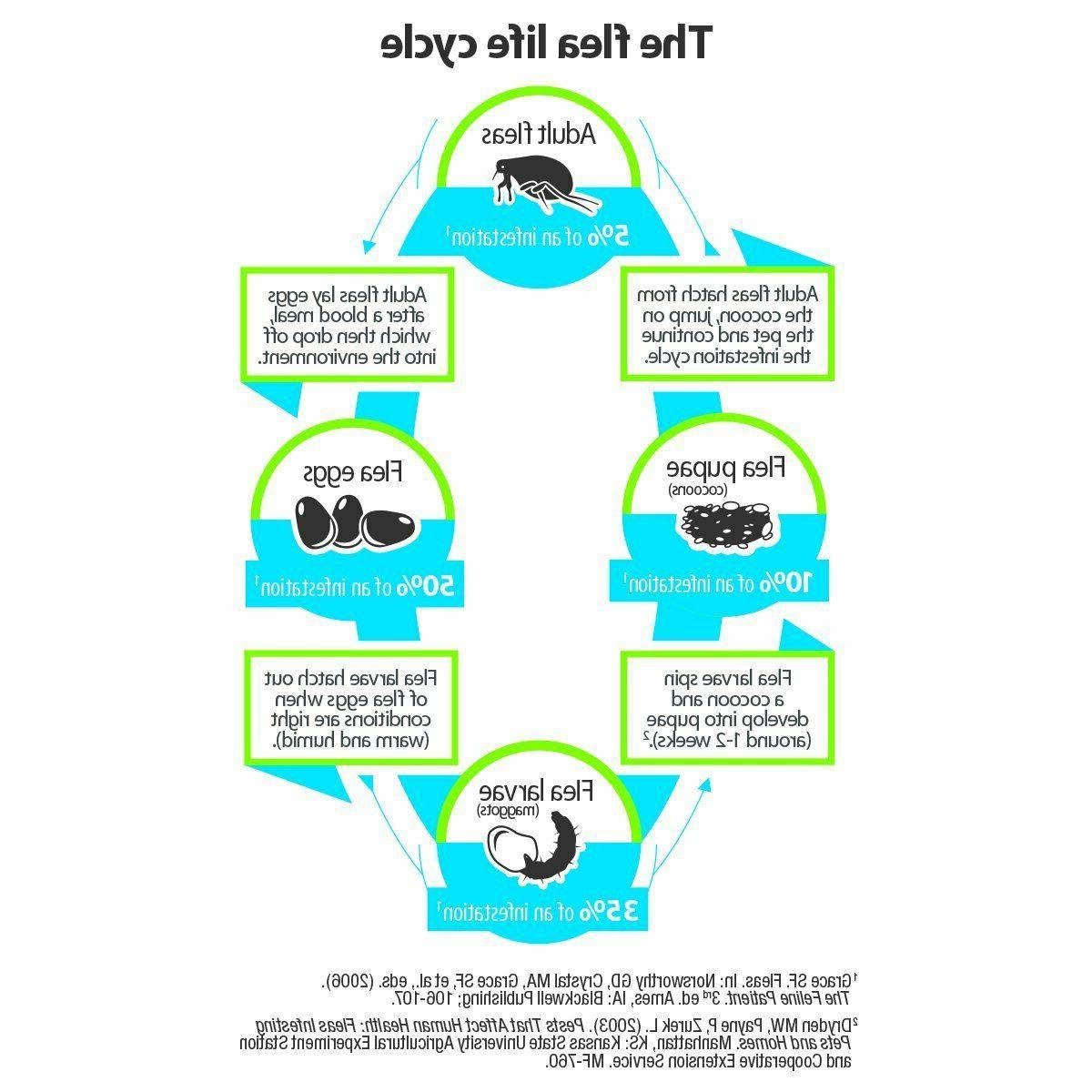Bayer Animal Shampoo Flea and Treatment For weeks