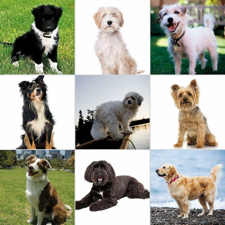 Wahl Pet Friendly