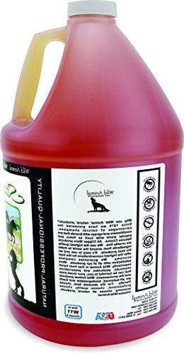 Wild Stampede 100:1 Shampoo Gallon