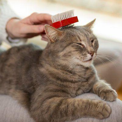 Vet's Best No-Rinse Clean Waterless Cat Shampoo. Formula,